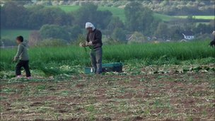 Child working in a Worcestershire field