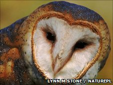 Lynn M Stone / Naturepl.com