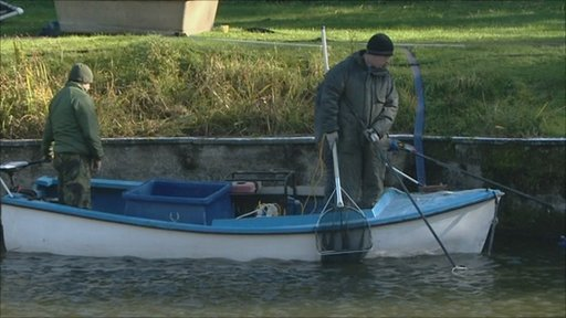 Bbc henleaze lake begins fish cull to improve water quality for Larry king fish oil