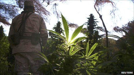 Trinidad Weed http://www.bbc.co.uk/news/world-us-canada-11626572