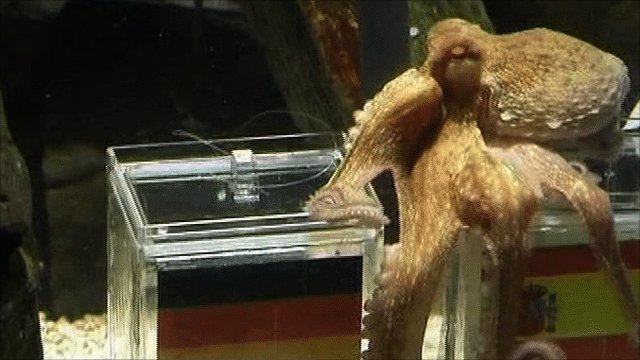 Paul the Octopus predicts the result of the World Cup final
