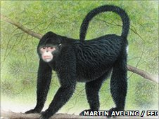 An artists' illustration of the Burmese snub-nosed monkey (c) Martin Aveling / FFI