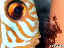 Discus fish with fry  (Image: Jonathan Buckley)