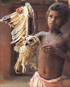 Boy with Mottled Wood owl