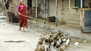 Woman with a flock of ducks