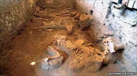 Donkey skeleton, Pompeii