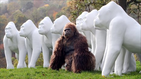 Gorilla sculptures