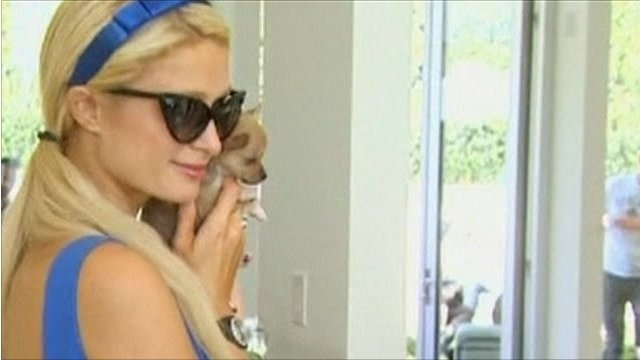 Paris Hilton and pup