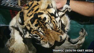 Tiger skin (Image: TRAFFIC South-East Asia)
