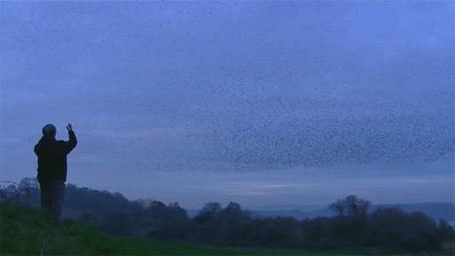 Bill Oddie watches starlings at sunset