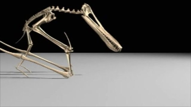 Pterosaur animation