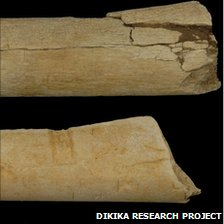 Bones from Dikika site (Dikika Research Project)