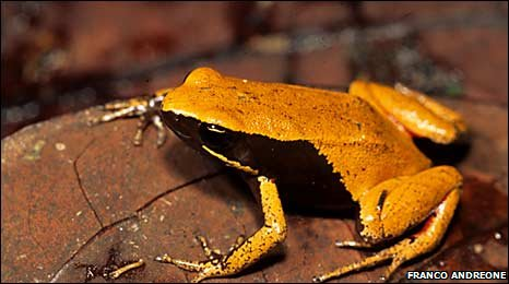 Parker Co Weather >> BBC - 'Significant' birth of rare frogs at Devon zoo