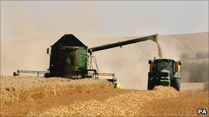 Harvest in Cambridgeshire, UK - file pic