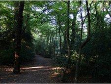 Generic woodland