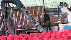 Inside the Fair Trees factory, with red bags full of cones in the foreground