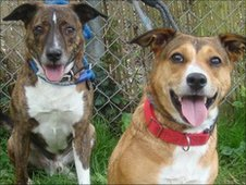 Dogs called Chantelle and Preston