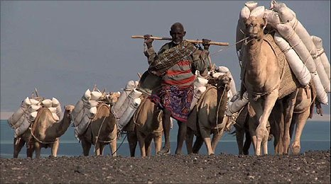 Salt trader using camels to transport his goods