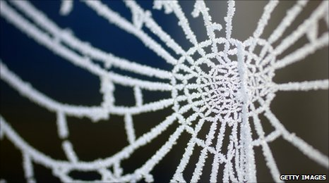 Frost on a spiders web