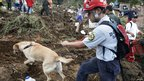 A rescue worker and a rescue dog search for victims