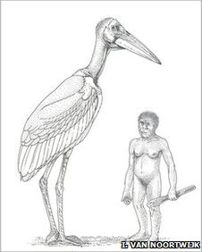 Artist�s impression of the size of the giant stork next to Homo floresiensis hobbit (Drawing by I. van Noortwijk)