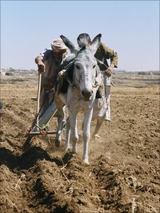 Yemeni farmers (photo by Leana Hosea)