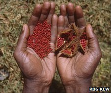 Seeds collected in Mali for the Global Crop Diversity Trust (Image: RBG Kew)