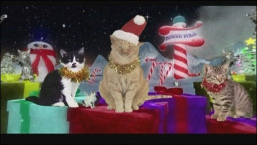 Jingle Cats!!