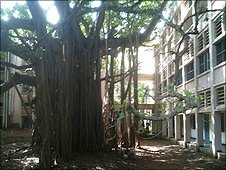 A banyan tree grows next to the buildings of Indian Institute of Technology Madras