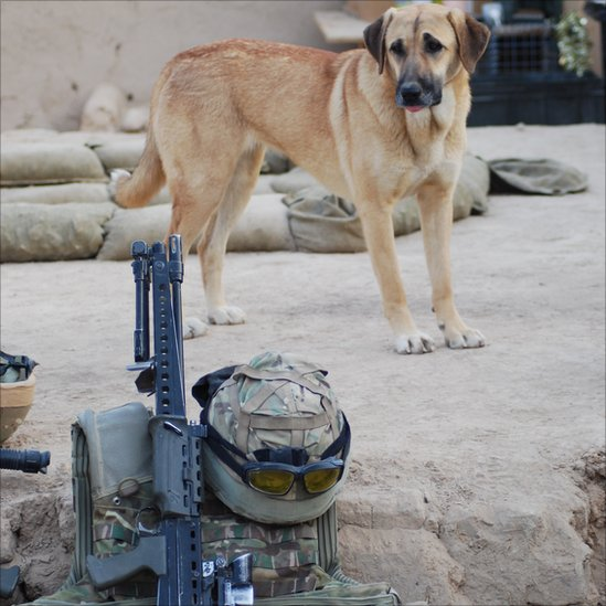 Dogs Brought Back From Afghanistan Brought Stray Dogs Back to