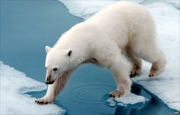 Emissions cut can still save polar bears
