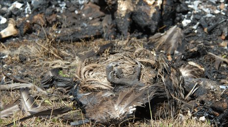 Dead, burned vultures in southwestern Kenya