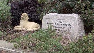 Jersey Animal Shelter