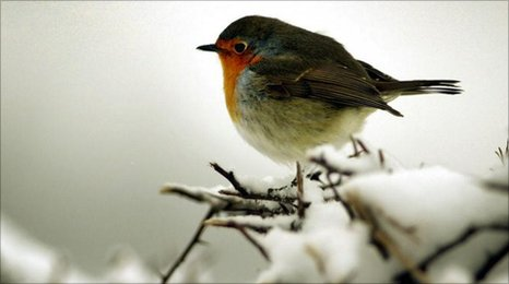 BBC - RSPB warns turkey fat is potentially lethal for birds