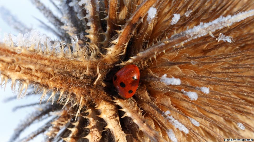 BBC News - In pictures: Wildlife in winter