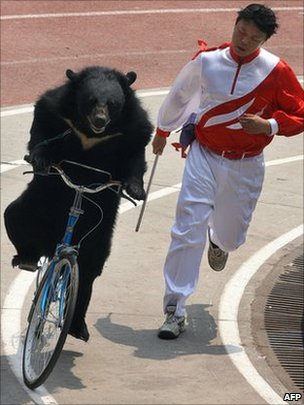 Bear on bicycle at Shanghai Wild Animal park, 02 May 2007