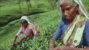 Sri Lankan tea pickers