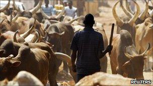 A southern Sudanese man herds bulls in a street in Juba, 26 December 2010