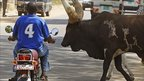 A southern Sudanese man stops his motorbike as a herd of bulls crosses a street in Juba (file image from 26 December 2010)
