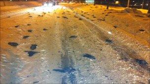 Dead birds in street in Falkoeping