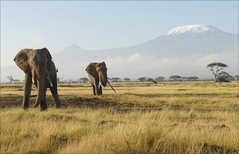 Elephants in Kenya near Kilimanjaro