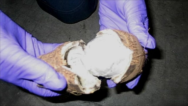 A yam with drugs hidden inside