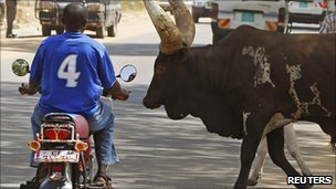 A southern Sudanese man stops his bike as herd of bulls cross a street in Juba 26 December 2010