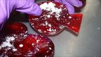Glass ornaments which had about 1kg of cocaine, discovered inside at Coventry International Postal Hub in August 2010. (UK Border Agency handout)