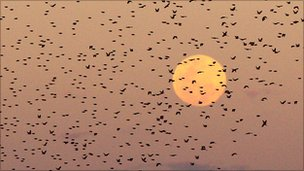 A flock of birds fly past the moon at dusk in the Mashatu game reserve on July 25, 2010 in Mashatu game reserve, Botswana.