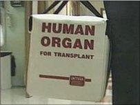 Organau