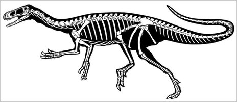 The silhouette of the skeleton of the Eodromaeus dinosaur