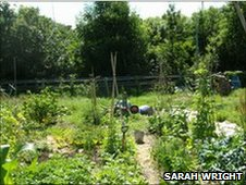 Plot on allotment at Feidrhenffordd