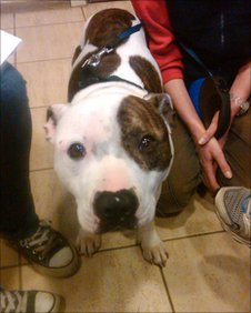 Cola the dog has been given a home