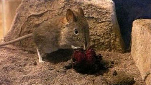 Elephant shrew and parasitic plant